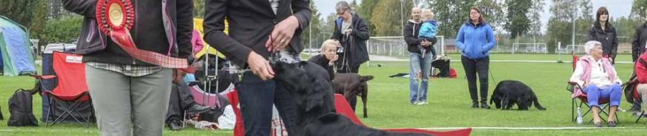 BIS jaktmeriterad NORD UCH Miss Mallorys Absolute Lady, flat, Madeleine Asp Mikko, Kiruna